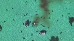 Des dizaines de requins dévorent une baleine sous l'oeil d'un