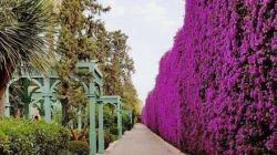 La Mamounia possède l'un des meilleurs jardins d'hôtels au monde selon The