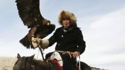 360도 영상으로 보는 독수리를 이용한 몽골의 전통