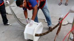 Ταϊλάνδη: Πύθωνας επιτέθηκε σε άνδρα που χρησιμοποιούσε την τουαλέτα του σπιτιού