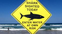 Αύξηση των επιθέσεων καρχαριών στις ΗΠΑ αναμένεται το καλοκαίρι του