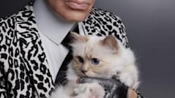 52만 원짜리 다이슨 헤어드라이기의 첫 주인은 고양이다