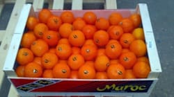 Le Maroc pourra de nouveau exporter ses agrumes vers les