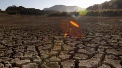 올여름 세계 식량난이 발발할지도