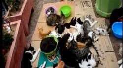 La municipalité d'Agadir menace de tuer les chats d'un militant pour les droits des