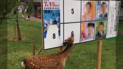 사슴이 선거 포스터 먹으면 선거법