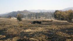 Σε κατάσταση έκτακτης ανάγκης περιοχές που επλήγησαν από φωτιά στη
