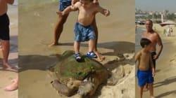 바닷가에 올라온 거북을 심하게 구타한
