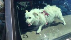 Ζευγάρι έκανε τα ψώνια του ενώ ο σκύλος του κόντεψε να πεθάνει στο αυτοκίνητο από τη