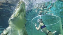 물 속에서 악어와 놀고 싶다면, 호주로 가야한다(사진,