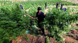 Αλβανία: Πολιτική αντιπαράθεση κυβέρνησης και αντιπολίτευσης, για την εκτεταμένη καλλιέργεια χασίς στη