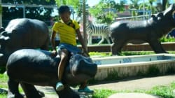 Des hippopotames, insolite héritage du capo Pablo Escobar en