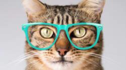 고양이가 정말로 물리학을