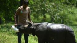 En Inde, de rares rhinocéros sous la menace des