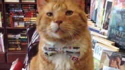 책을 너무도 사랑한 고양이 '위대한 캣츠비' 씨의