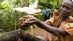 An die Vereinten Nationen: Wir brauchen endlich gerechte Preise für Kaffee und