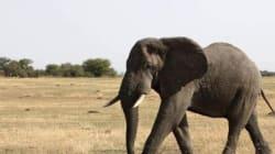 Le trafic d'ivoire, principale source de financement du terrorisme en