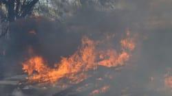 Πυρκαγιά σε δασική έκταση στο Χάνι