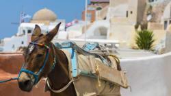 Major Tourist Scams: Transport