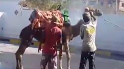 Tunisie: Il lave son chameau dans une station de lavage