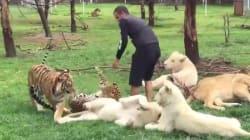 Λεοπάρδαλη ορμά για να τον κατασπαράξει και τον σώζει μία τίγρης. Απίστευτο περιστατικό σε ζωολογικό κήπο του