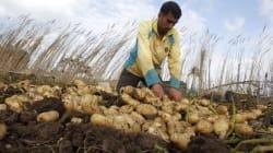 La Tunisie bloque l'entrée des pommes de terre algériennes, les exportateurs algériens