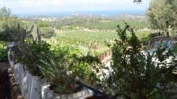Αφιέρωμα στην Κρήτη: Όλη η παραδοσιακή αγροτική ζωή στο κτήμα της φάρμας