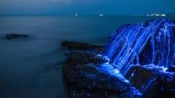 Αυτές οι «φωτεινές» γαρίδες είναι το φυσικό θαύμα που δεν γνωρίζαμε ότι