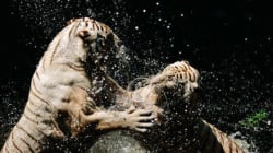 Τι θα συνέβαινε εάν τα ζώα αποκτούσαν την ευφυία