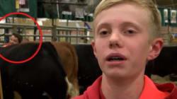 Un enfant s'en prend à deux vaches et reçoit une leçon de