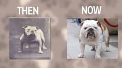 Πως εξελίχθηκαν γνωστές ράτσες σκύλων τα τελευταία 100 χρόνια σε ένα