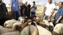Un Tunisien sur 5 ne sacrifie pas de mouton pour l'Aïd à cause de la hausse des