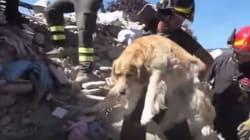 Ο Ρομέο εντοπίστηκε ζωντανός κάτω από συντρίμμια 9 μέρες μετά τον σεισμό στην