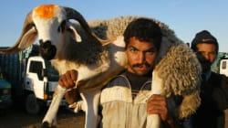 L'Aïd Al Adha, ou le business juteux du mouton