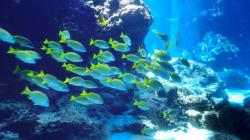 Des océans «malades» du réchauffement, préviennent des