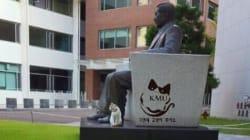 국민대 캠퍼스에서는 10여 마리 고양이들과 학생들이 '공생'하고 있다