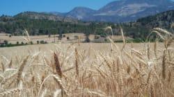 Un complexe de céréales en cours de réalisation à Aflou, à