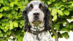Βρετανία: Αστυνομικός σκύλος εκπαιδευμένος να βρίσκει σπέρμα για τη διερεύνηση σεξουαλικών