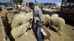 Aïd el Adha: Ouverture d'une enquête sur des viandes ovines
