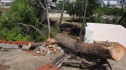 Προβλήματα λόγω ισχυρών ανέμων στη δυτική Ελλάδα: Ζημιές σε Πάτρα και
