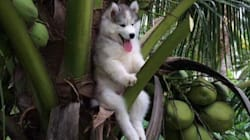 La position de ce chien vaut le