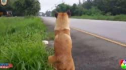 Ο σκύλος που σκοτώθηκε περιμένοντας ένα χρόνο στο ίδιο σημείο το αφεντικό