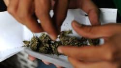 Plus de 500 tonnes de cannabis saisis ces 3 dernières années en