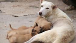 Η ΕΛ.ΑΣ. αποκαλύπτει: Εκατοντάδες αυτοί που βασανίζουν και θανατώνουν ζώα στην