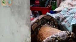 Ο χειρότερος εφιάλτης: Ιδιοκτήτης βλέπει πύθωνα να καταβροχθίζει τον σκύλο