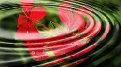 Hypnose - wie funktioniert das eigentlich und bringt es wirklich