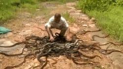 Άνδρας απελευθερώνει ταυτόχρονα 285 φίδια στην άγρια