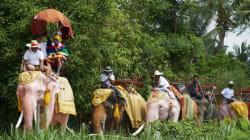 Τέλος στις βόλτες με ελέφαντες: Το TripAdvisor σταματά να πουλά εισιτήρια για θεάματα που αφορούν άγρια