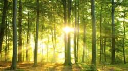 44개국 과학자 80명이 세계 각지의 나무 3000만 그루를 조사해 얻은 결과는 좀