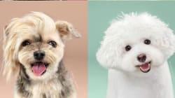 Σκυλιά πριν και μετά το